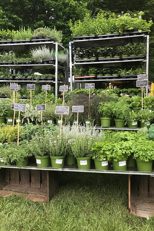 Beste Kräuter: Impressionen aus der Biogärtnerei